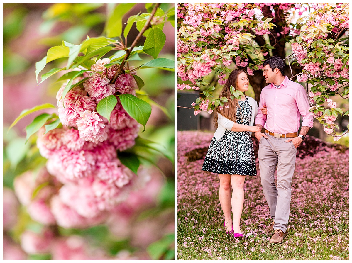 Cherry_Blossom_Columbia_MD_photographer-11.jpg